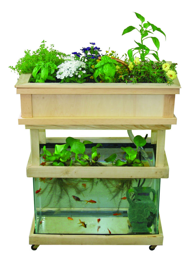 DIY Aquaponic Systems In Your Backyard Or Garage. Quick And Easy. Grow  Organic Vegetables And Fish In A Self Contained Hydroponic Garden And Tank.