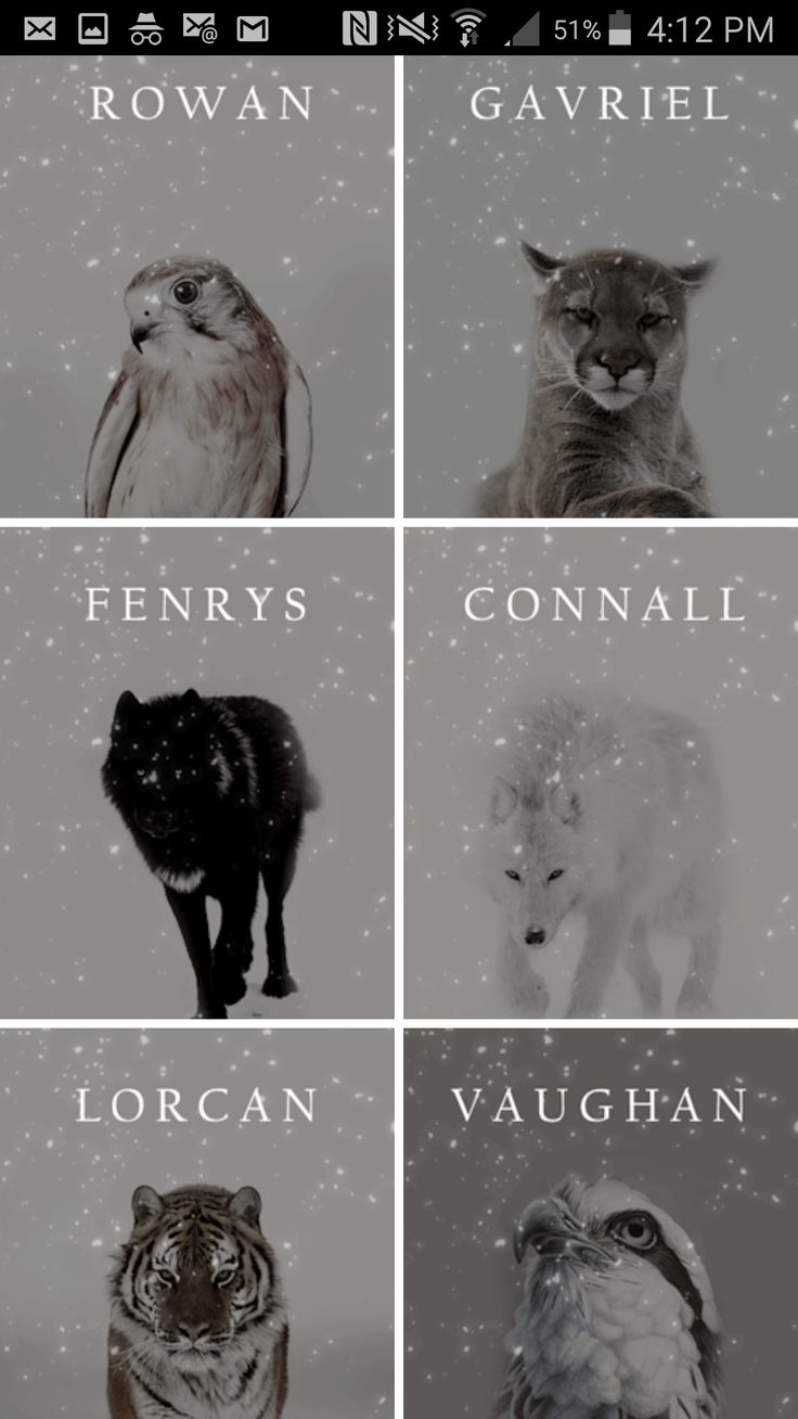 Only one mistake.... fenrys is the white wolf and connal is the black wolf