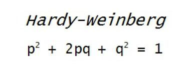 The Hardy Weinberg Equation can be used to calculate the frequency of alleles in a population - Heather Scoville