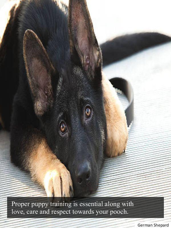 Been Looking For German Shepherd Rescue Wisconsin Types Of