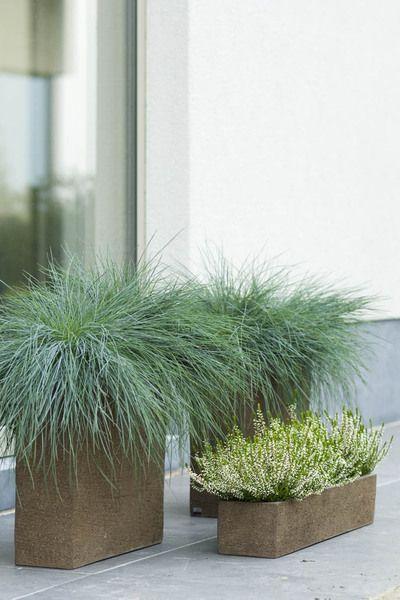 Najaarsgroen. Plantencombinaties vr herfst en winter