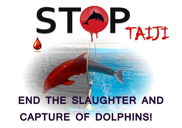 """taiji dolphin hunt The japanese government has been telling the world that the taiji dolphin hunt is all a matter of tradition even local villagers claim that the hunt is a """"critical part of their economy and a ."""