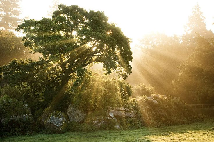 Jak čerpat energii ze stromů