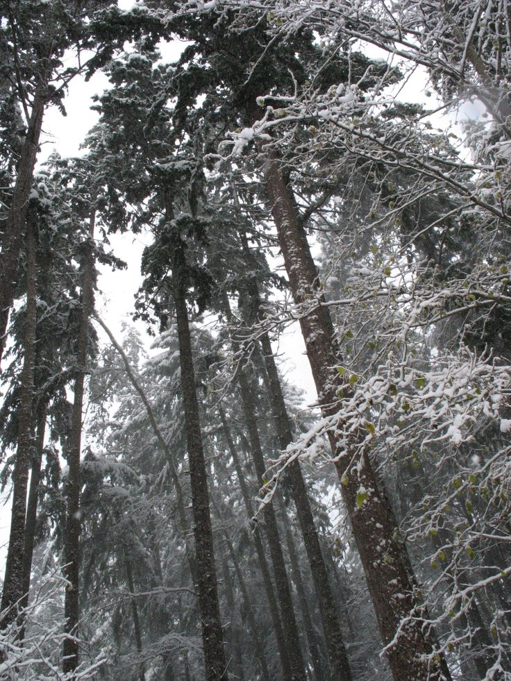 don't go in the forest - winter storm Vancouver Island