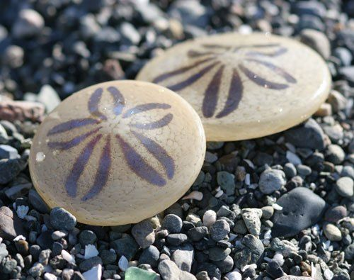 Sand Dollars - burrowing sea urchins belonging to the order Clypeasteroida