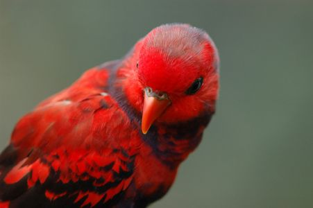 Beautiful red animals in the world
