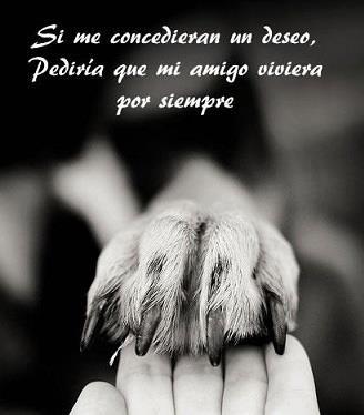 mi amig@ por siempre. perros. gatos. mascotas.