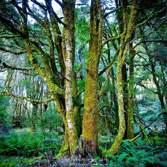 Vale of Belvoir, a small untouched stretch of alpine forest near Cradle Mountain via http://buff.ly/1Lf7xBn?utm_content=buffer02a9a&utm_medium=social&utm_source=pinterest.com&utm_campaign=buffer #tasma…