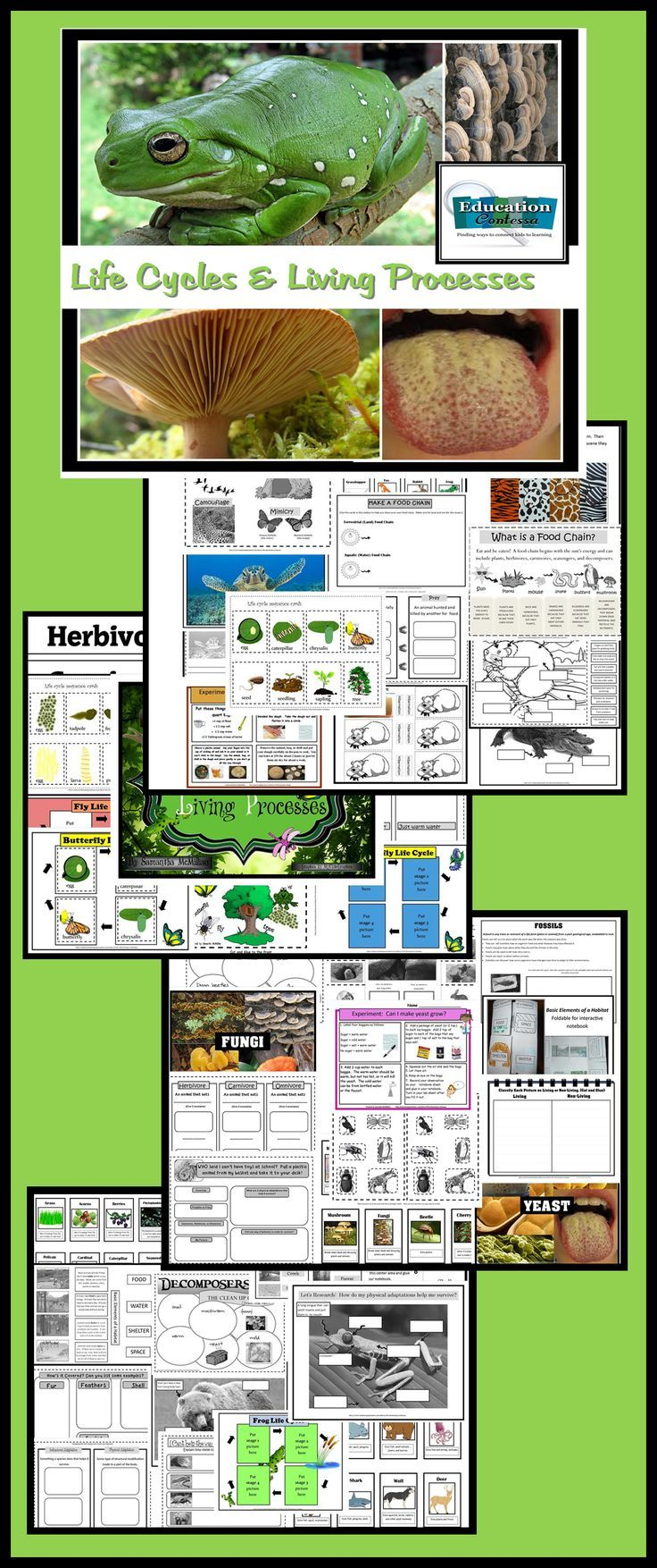 English In Italian: 1000+ Images About HOMESCHOOL RESOURCES & IDEAS On