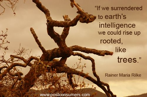 17 Best Images About Our Mother Earth On Pinterest