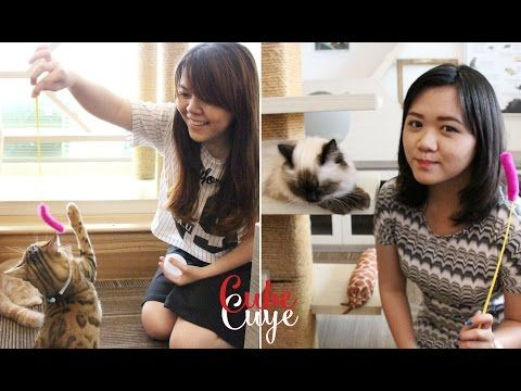 Icip-Icip Ep. 1 : Cutie Cats Cafe Indonesia - YouTube