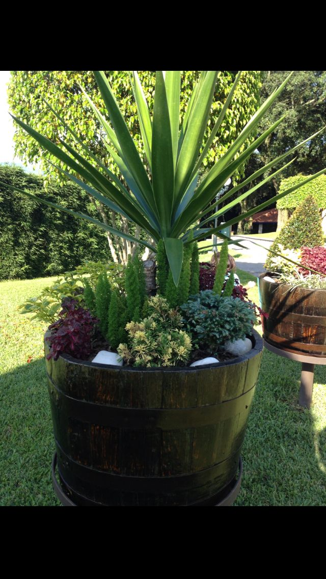 Arbustos en maceta para entradas casa dise o for Arbustos para macetas exterior