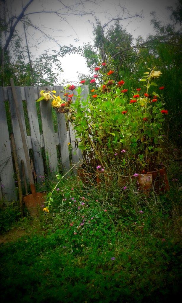 #gardenflowers #vegetablegarden #home #country