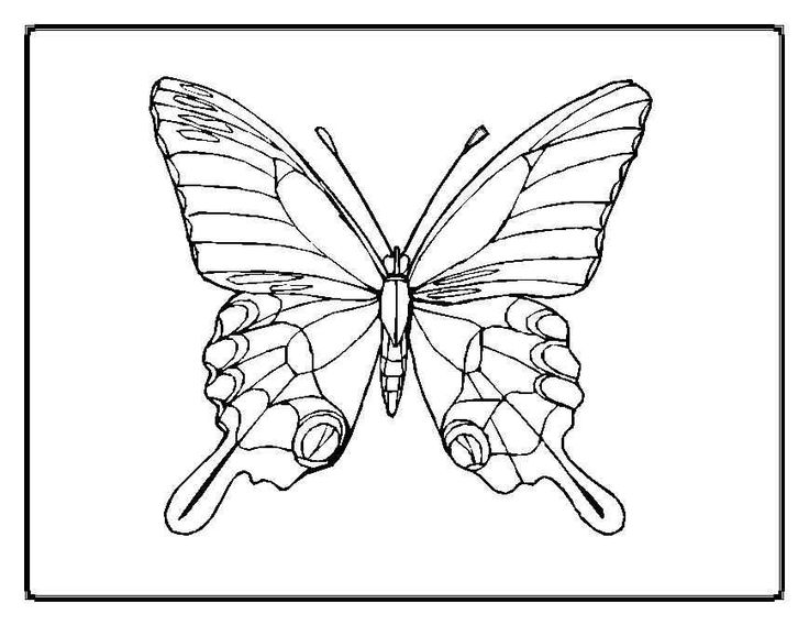 free printable butterfly coloring pages adults - Butterfly Printable Coloring Page