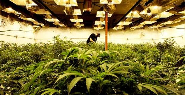 Είναι η μαριχουάνα αντικαρκινικό φάρμακο;