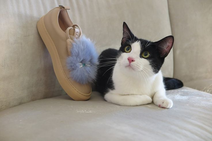 "- ""Frankie, you need to make up your mind"" says the innkeeper; - ""But I want all of the shoes!!!"" says Frankie, the cat. #JosefinasCatSeries"