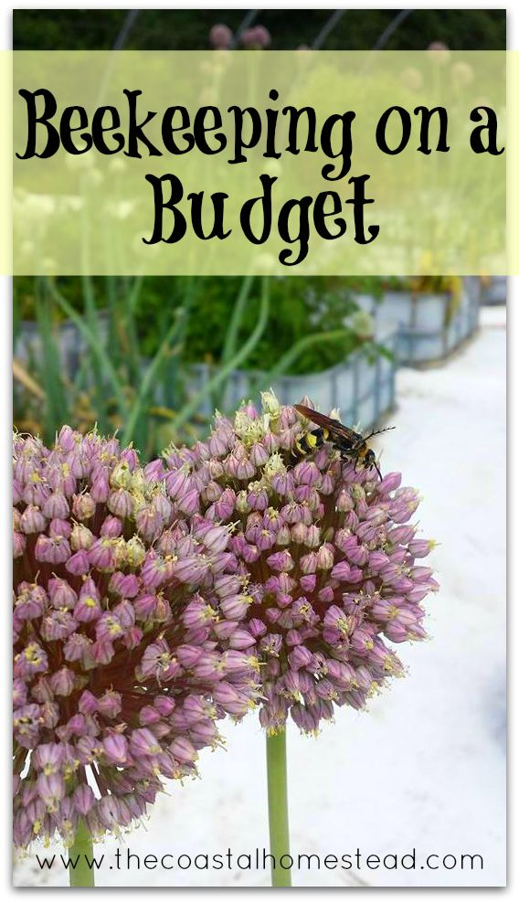 How to start beekeeping on a budget. Money saving tips and DIY's, everything you need to know to get your supplies for cheap.