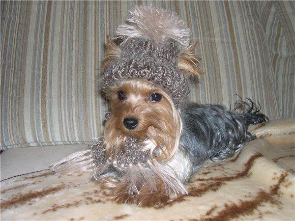 вязаная одежда для собак. Обсуждение на LiveInternet - Российский Сервис Онлайн-Дневников