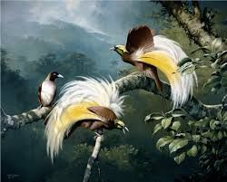 birds paradise - Google Search