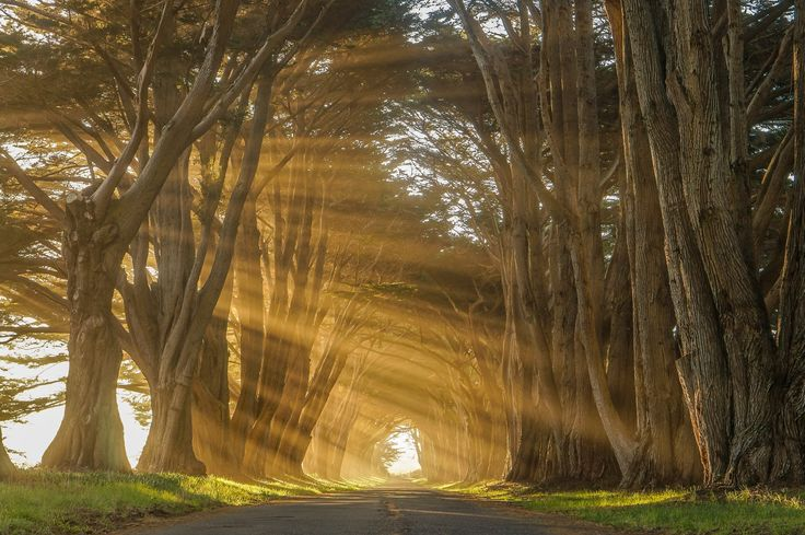 """Cypress Tree Tunnel - Point Reyes Located in between the Pacific Ocean and Tomales Bay (and inside of the Point Reyes National Seashore) you'll find this Monterey cypress """"tree tunnel"""" that leads to an old Point Reyes wireless telegraphy receiving station built in the 1920s. Doesn't matter if you catch it with a patch of early morning fog enveloping either end, or with the afternoon light breaking through its interlocked branches, either way, you'll feel like you've won the damn day."""