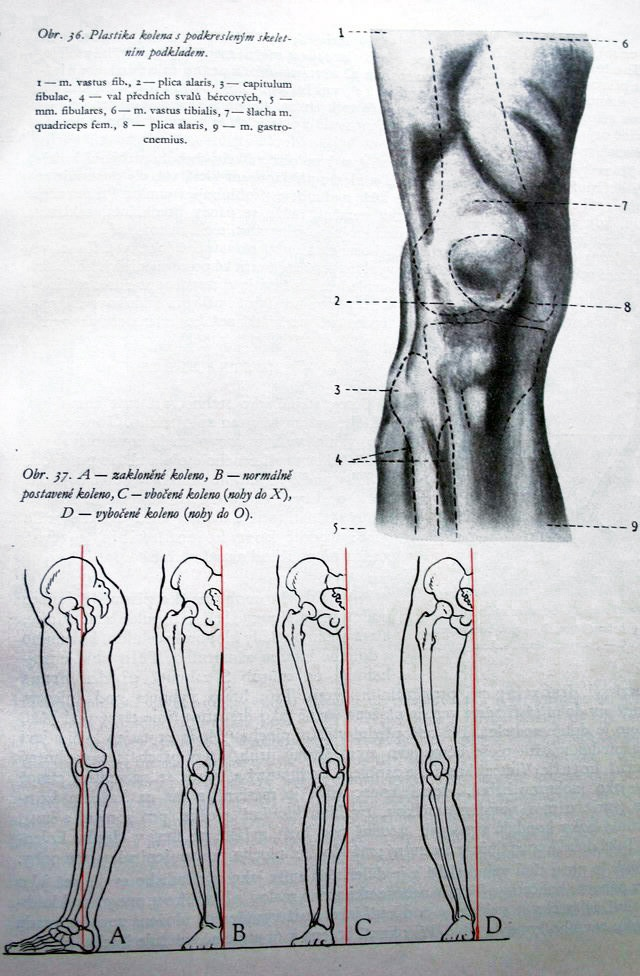 81 best Drawing Reference - Anatomy - The Leg images on Pinterest ...