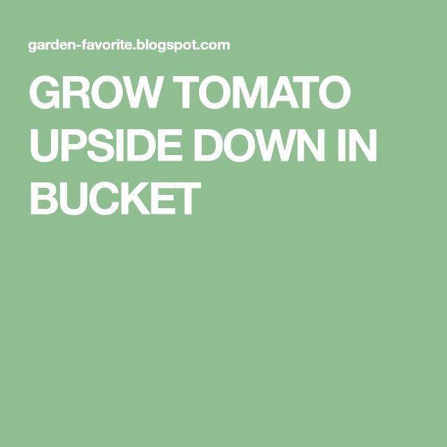 GROW TOMATO UPSIDE DOWN IN BUCKET