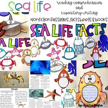 This 74 page pack has 9 nonfiction reading passages that students use to write facts and/or books. You can turn this pack into an adorable ocean bulletin board. Students read the articles and write facts that they learned about them. They can turn the facts into a one page fact sheet or