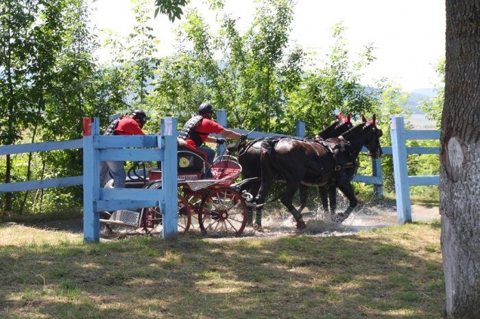 Weekendul acesta, Herghelia Beclean găzduiește una dintre etapele Campionatului Național de Atelaje. Ce înseamnă asta? Trăsuri și de 20-30.000 de euro și exemplare de cabaline care ajung la 80.000 de euro, care au făcut spectacol.  Cam asta s-a putut vedea astăzi la Beclean.