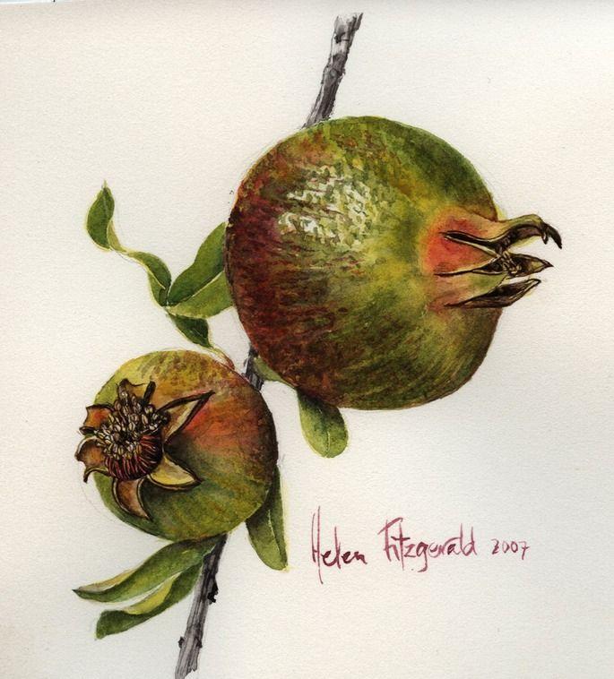 Pomegranate - Helen Fitzgerald