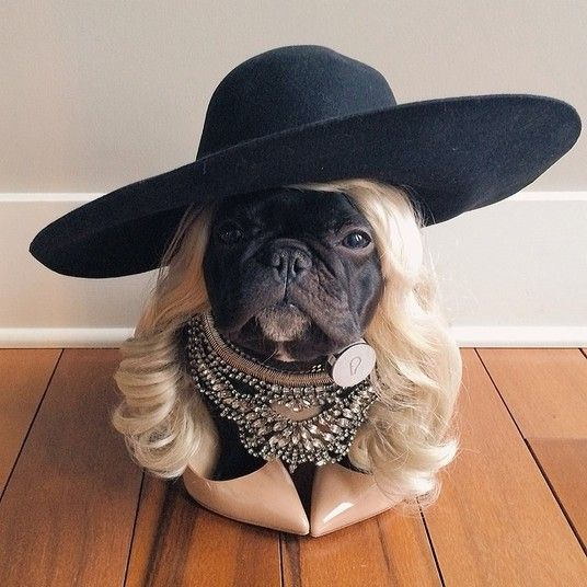 10 best cachorro de peruca images on pinterest funny animals de cachorro a coelho conhea os bichos que esbanjam estilo nas redes sociais fandeluxe Images