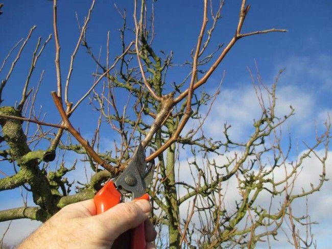 Les 27 meilleures images du tableau trouver des porte greffes pour fruitiers sur pinterest - Quand traiter les arbres fruitiers ...