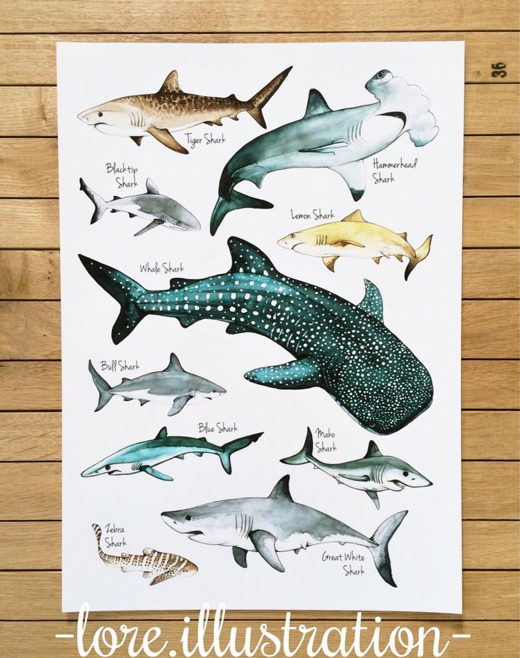 Sharks Poster by my wife - pens and watercolor, A3