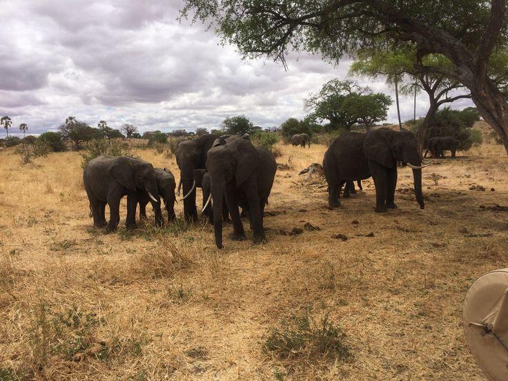 Safari in Tanzania - an experience that is so amazing it's hard to put it to words @ runningforthegate.wordpress.com