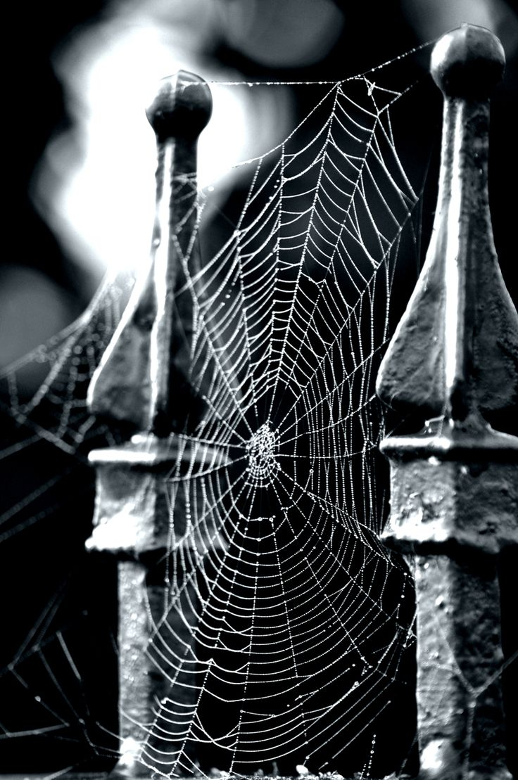Spider web on top of an iron gate. Something spooky for Halloween