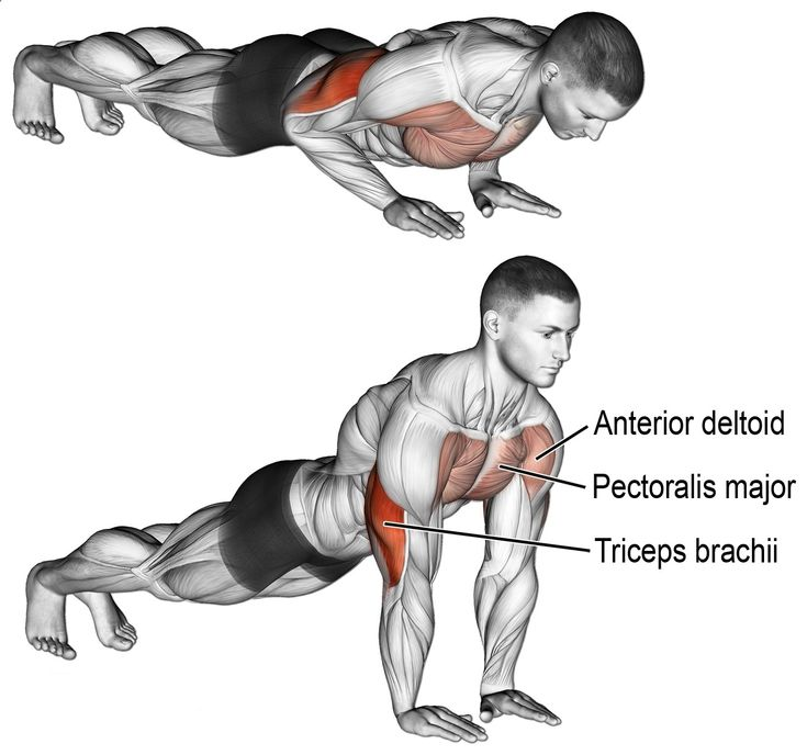 chest n triceps workout - 735×688