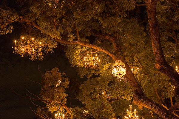 The Chandelier Tree of Silver Lake, Los Angeles | Los angeles
