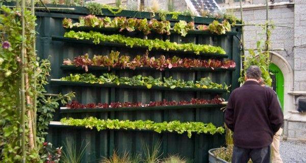 Verticale tuin met dakgoten, DIY! | Tuinieren met Bakker