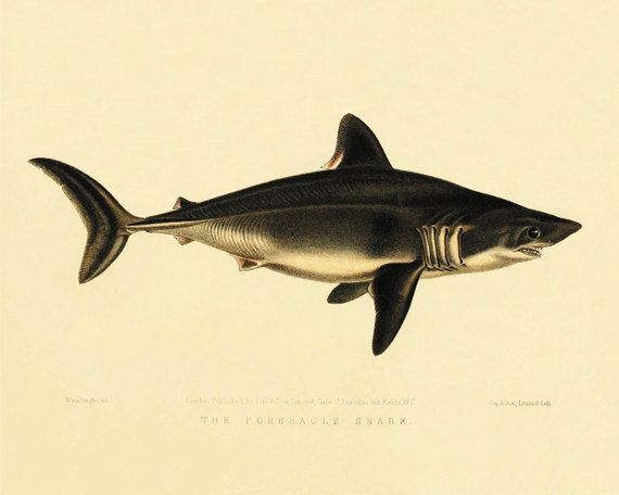 Shark Fish art print Ocean art Sea beach art Victorian print Antique wall art Nature wall art Home decor prints Fish art Beach decor