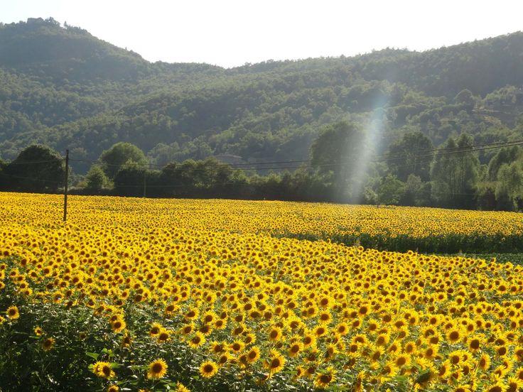 <h3>3. Подсолнечные поля в Тоскане, Италия</h3><p>Если вы посещаете Италию в разгаре лета, обязательно съездите в подсолнечные поля, вы не пожалеете. Бесконечные ряды ярко-желтых цветов красуются между средневековыми деревеньками и нескончаемыми холмами.</p>