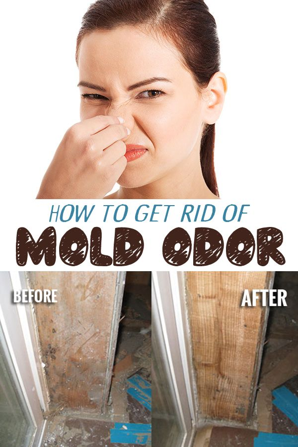 how to get rid of mold odor frangance recipes mold odor klean