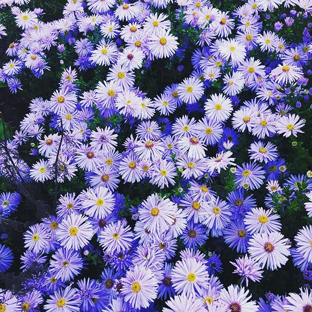 Flwr 9 Weimar Flower Blumen Amazing Beautiful Blume Flowers Beginner Photography Flwr 9 Weimar Flower Blumen Am Fall Plants Fall Flowers Plants