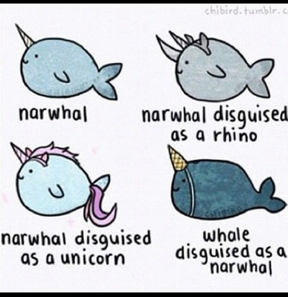 Cute Drawing Ideas Narwhal Nonsense Pinterest The Ojays Comment And Drawings