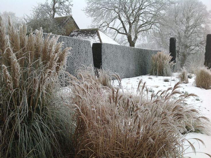 109 best Winter garden images on Pinterest Winter garden Garden
