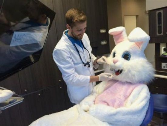 Dentist: Which came first, the chocolate chicken or the chocolate egg? Easter Bunny: Stop Hare-assing me, after last night I'm Egg-zosted and have an eggache!   Dentaltown - The Easter Bunny