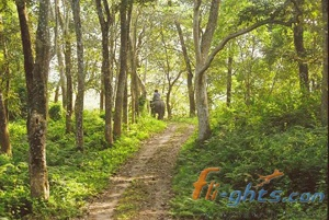 How to reach Orang National Park of Assam? | Assam is a pure land and is blessed with beautiful hills, rich flora, lush green meadows, huge mountains, wonderful tea plantations and giggling Brahmaputra River.