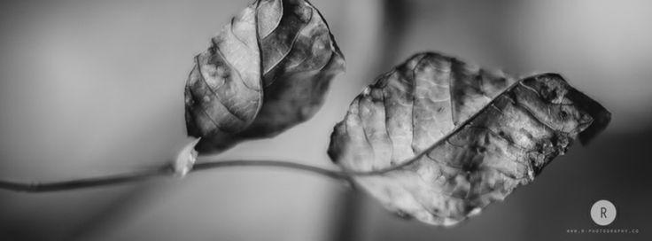 "Project ""Winter"" #still life #Photography #B&W #fineart"