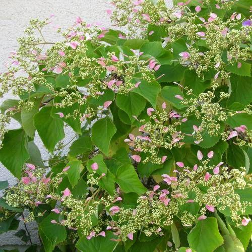 326 best plantas jardin japones images on pinterest for Plantas jardin japones