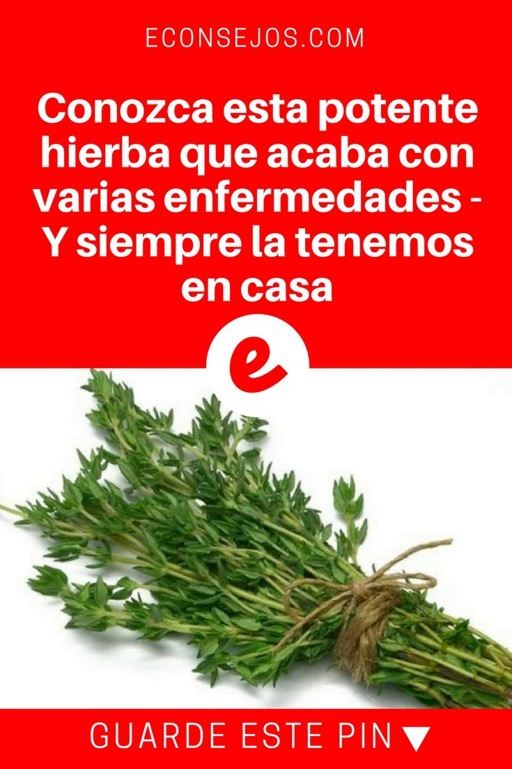 Tomillo propiedades | Conozca esta potente hierba que acaba con varias enfermedades - Y siempre la tenemos en casa | La hierba más potente que destruye parásitos, infecciones del tracto urinario y de la vejiga, herpes, virus de la gripe, dolores en las articulaciones, artritis, ciática, cándida y mucho más.