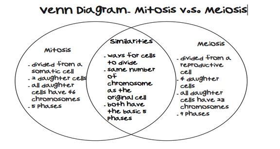 Answer Mitosis Meiosis Vs Venn Key Diagram