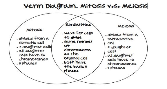 Mitosis vs #Meiosis Venn Diagram Comparing and Contrasting Mitosis ...